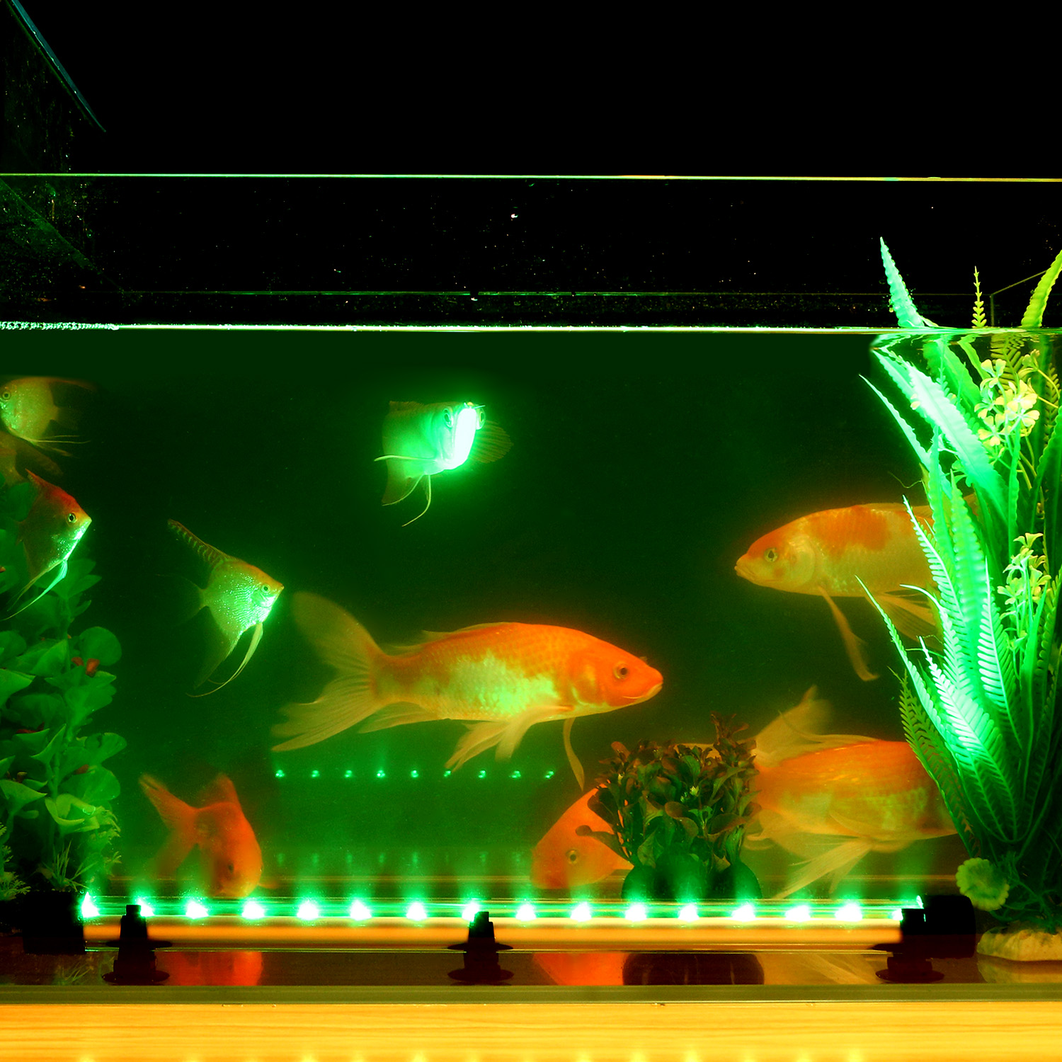 lights led image sample light awful ideas tank full colorful clip remote aquarium zjl high size for fish coral quality of free